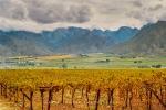Landscape - Autumn Harvest, Hex River Valley, South-Africa - Kodak 200 ColorPlus