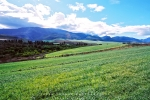 Landscape - Pastoral Scene, Greyton Surrounds, South-Africa - Kodak Ektar 100
