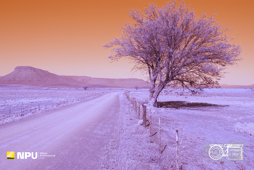 Infrared Landscape - Hantam Karoo, Nieuwoudtville, South-Africa - Hoya R72 Filter Infrared