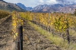 Winter Winelands, Wolseley, South-Africa