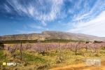 Springtime, Barrydale, South Africa