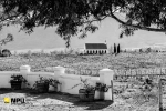 Montpellier de Tulbagh in Late Autumn, Tulbagh, South-Africa