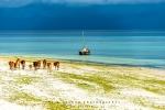 This Is East Africa, Nungwi, Zanzibar, Tanzania