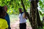 Cocoa Pods, Zanzibar, Tanzania