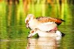 Wildlife - Pied Kingfisher, Intaka Island, Cape Town, South-Africa - Fujifilm Superia X-TRA 800