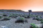 Infrared Landscape - Hantam Karoo - South Africa  Hoya R72 Filter Infrared