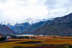 Autumn Patches & Snow In Hex River Valley, Hex River Valley, South-Africa