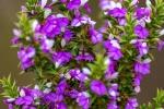 _CFP4558W, Bontebok National Park, Swellendam, South-Africa