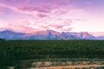 Landscape - Pastel Sunsets in Slanghoek Valley - Konica Centuria 100