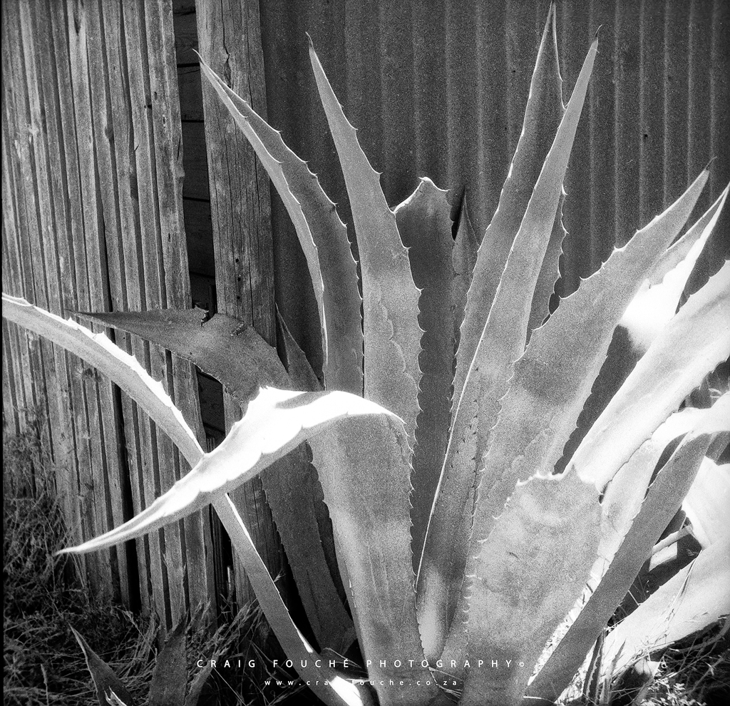 Plant, The Studio Barn, Barrydale, South-Africa - Rerapan 400