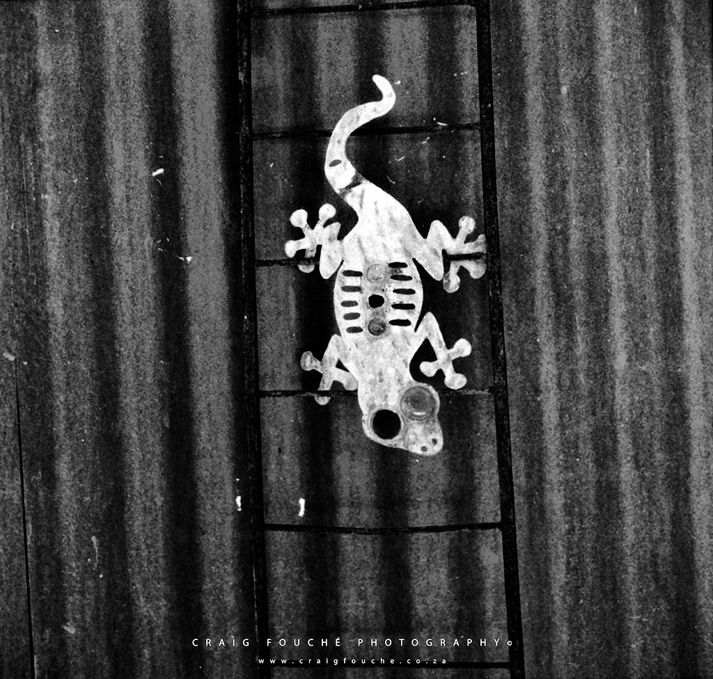 Gecko, The Studio Barn, Barrydale, South-Africa - Rerapan 400