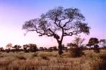 Landscape - Landscape - Bushveld Evening Light - Satara, Kruger National Park, South-Africa - Kodak Portra 160