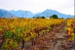 Landscape - Winter Is Coming At Deetlefs Wine Estate, Rawsonville, South-Africa - Kodak Ektar 100