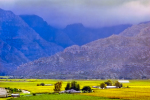 Landscape - Season Change At Hex River Valley, Hex River Valley, South-Africa - Kodak Ektar 100