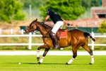 Polo Practice, Val de Vie, Paarl, South-Africa