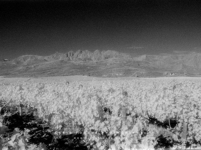 Nikon F6, Kodak HIE 400, Infrared